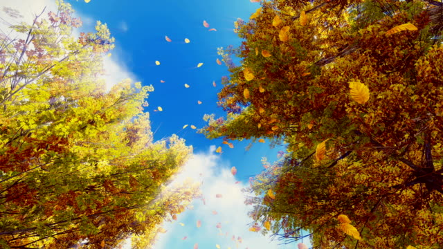 Falling autumn leaves and sunny sky in slow motion video