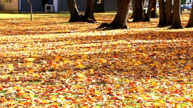 Falling autumn leaves in the wind, arrow town, new zealand video