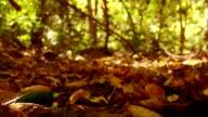 Falling autumn leaves video
