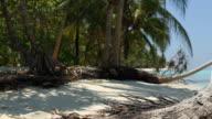 falling coconut wide video
