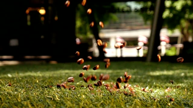 Falling coffee beans into lawn, slow motion shot video