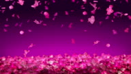 Falling Flower Pink Blossom video