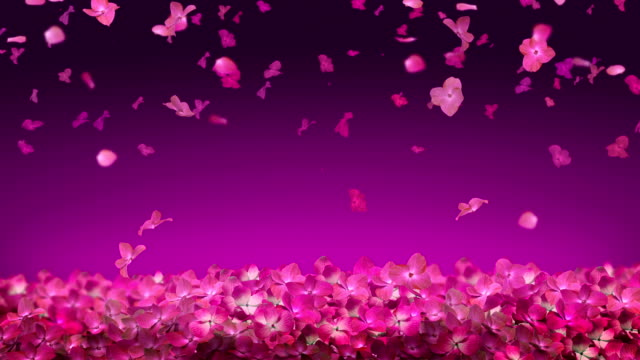 Falling Flower Pink Blossom video