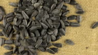 Falling grains of sunflower seeds on a rotating cloth burlap video