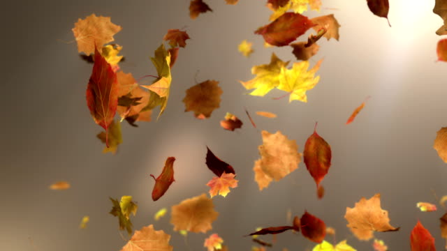 HD: Falling Leaf Loopable Background video