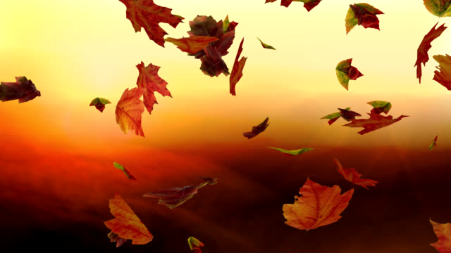 Falling leaves against a sunset - Looping video
