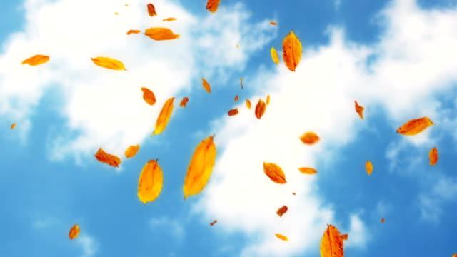 Falling leaves against the sky loop video