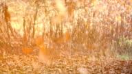 Falling leaves, autumn, sun video
