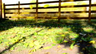 Falling leaves in autumn video