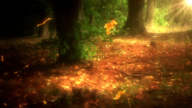 Falling leaves in the forest loop video
