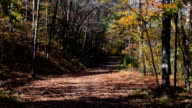 Falling Leaves in Woods video