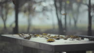 Falling leaves on the stone table, autumn, sun, playground video