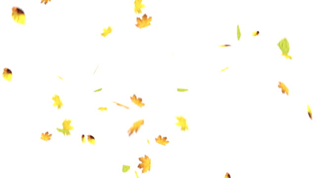 Falling leaves on white screen video