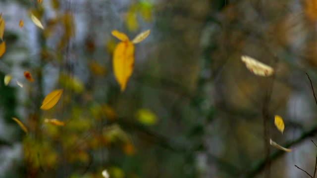 Falling leaves video