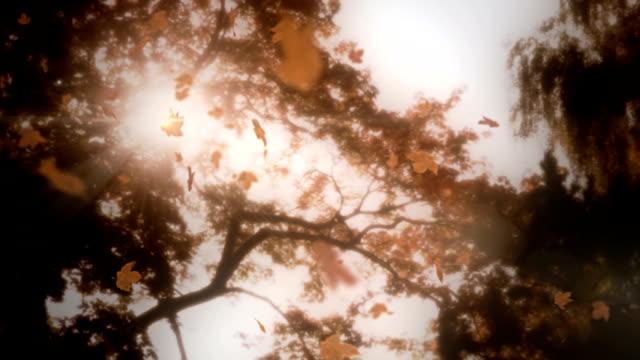 Falling leaves with lens flare loop video