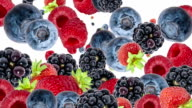 Falling Mixed Berries as background video (with Alpha) video