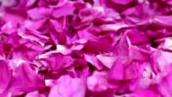 falling petals red rose video