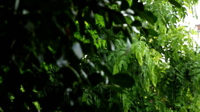 Falling rain and tree background video