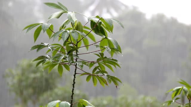 Falling Rain video