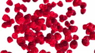 Falling raspberries on white background video