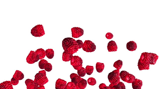 Falling raspberries on white background video