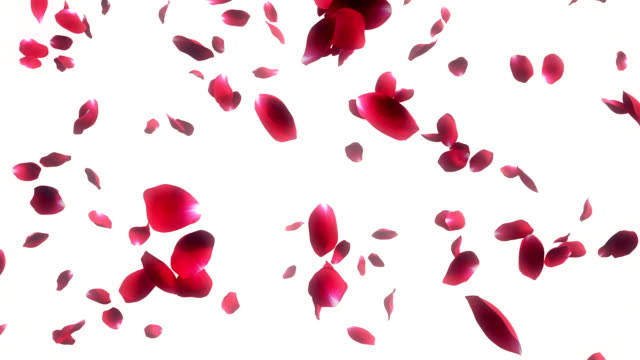 Falling Rose Petals white Background video