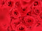 Falling Roses Background video
