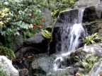 NTSC: Falling water in Japanese garden (video) video