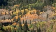 Fall's Aspen video