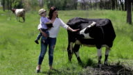 family and black cows video