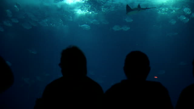 Family and people admire fishes in aquarium video
