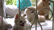 Family dog cute pets, dolly short 4k video