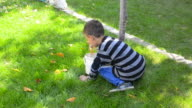 Family kid collecting, picking leaves in garden - Stock Video video