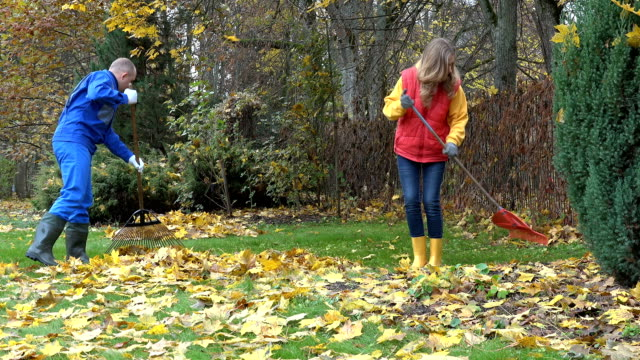 Family man and woman raking leaves together in household garden yard video