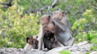 Family Monkey video
