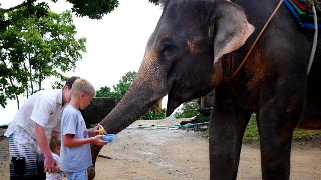 Family petting the elephant and feed him bananas. PHANGAN, THAILAND video