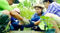 Family Planting a Tree Together video
