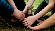 Family Planting Flowers Together. video
