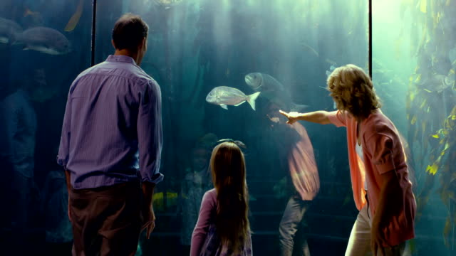 Family pointing at fish in the aquarium video