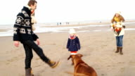 MS TS Family with dog playing football on beach video