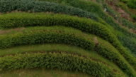 Famous attraction of Longsheng Rice Fields video