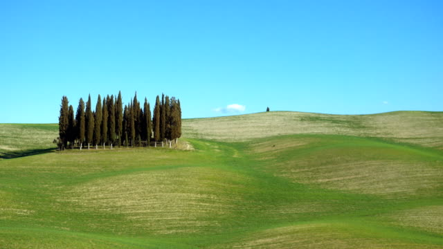 famous cypress island at the Siena region video