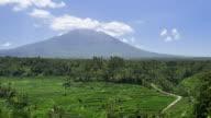 Famous rice terrace near tirtagangga in Bali Indonesia video