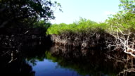 Fantastic Airboat ride in the Everglades video