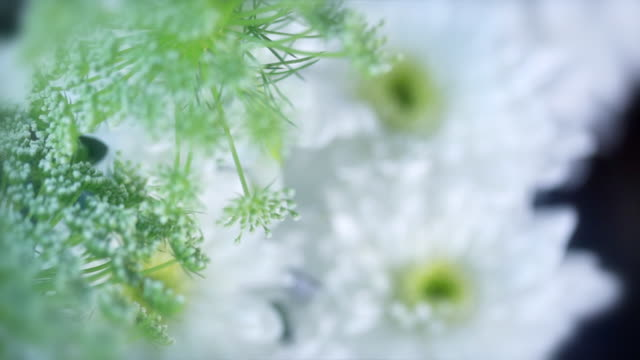 Fantastic depth of field flowers rotating video