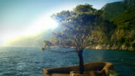Fantastic landscape video background. Tree and the sea, Hvar, looped video