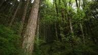Fantastical Oregon forest video
