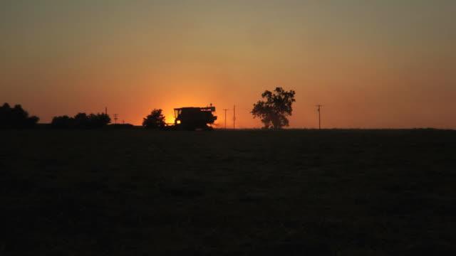 Farm combine harvesting wheat field at sunset video