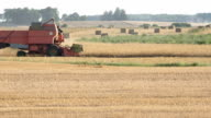 farm combine work in cereal field harvest time countryside video
