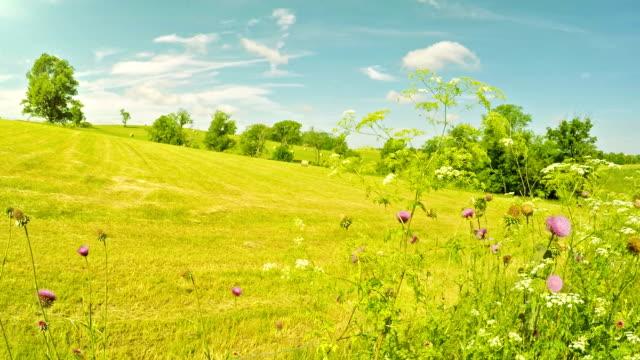 Farm field in Kentucky video